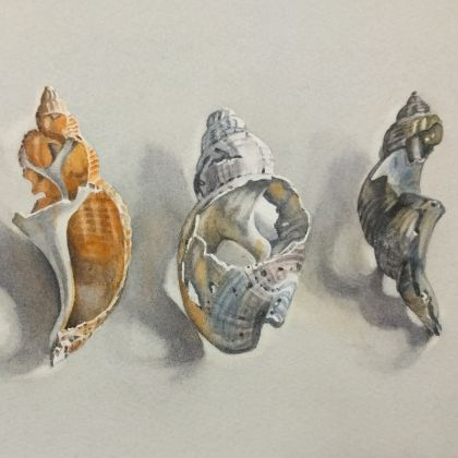 Lillias August Three Broken Shells, Watercolour on paper 23 x 15 cm.