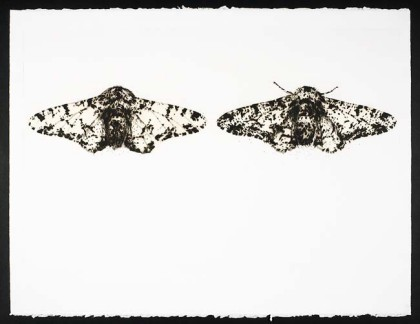 29Peppered Mothsdryp_eng_45x70_5Ed5